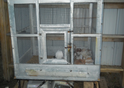 Fantail Cage in New/Working On Barn