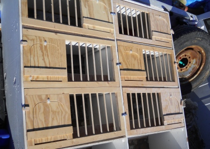 Our New 8 hole wall mounted Pigeon Breeding Boxes