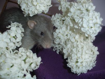 Josef in the Lilacs