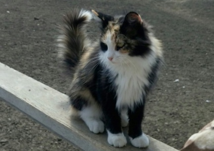 Calico On My Porch 2016-08-01